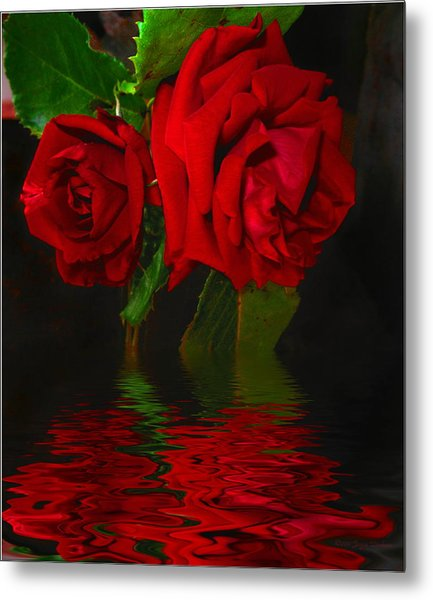 Red Roses Reflected Metal Print