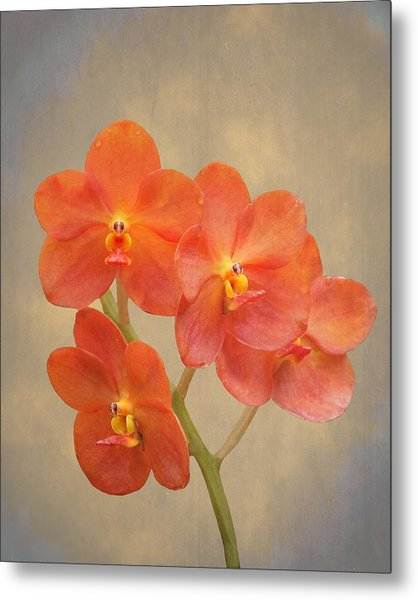 Red Scarlet Orchid On Grunge Metal Print