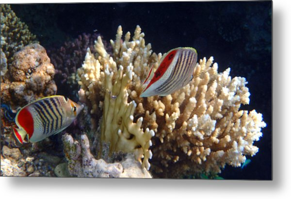Red Sea Beauty 2 Metal Print
