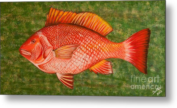 Red Snapper Metal Print