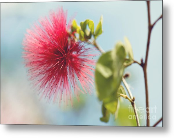 Metal Print featuring the photograph Red Sparkle by Yew Kwang