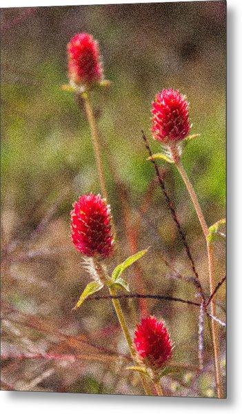 Red Spiky Flowers Metal Print by Karen Stephenson