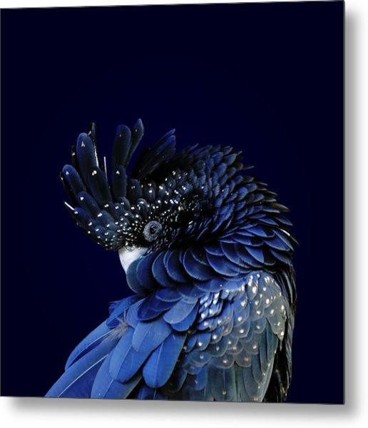 Red-tailed Black Cockatoo Metal Print by © Debi Dalio