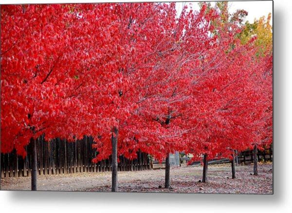 Red Tree Line Metal Print
