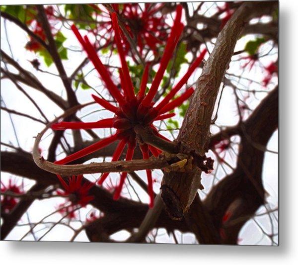 Red Tree Spiders  Metal Print
