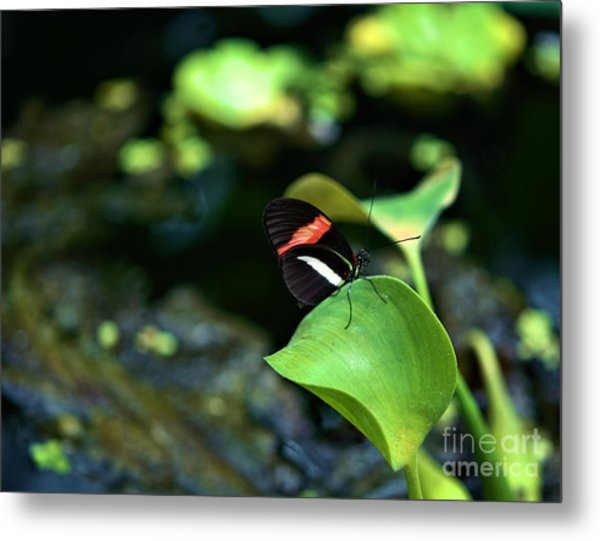 Red White Black Butterfly Metal Print