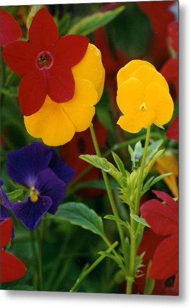 Red Yellow Purple Flowers Metal Print