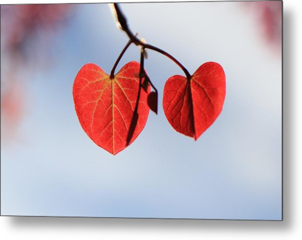 Redbud Illumined Metal Print