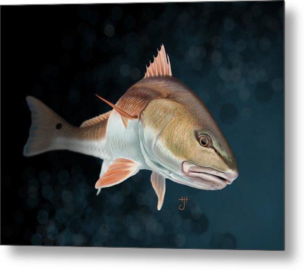 Redfish Inspection Metal Print