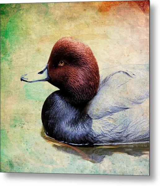 Redhead Duck Paint Metal Print