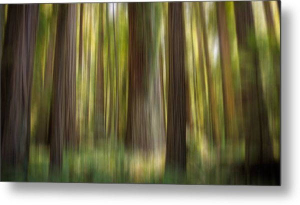 Redwood Dream Metal Print