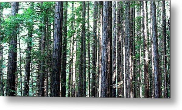 Redwoods 2 Metal Print by Greg Thiemeyer