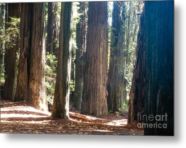 Redwoods 2.2843 Metal Print by Stephen Parker