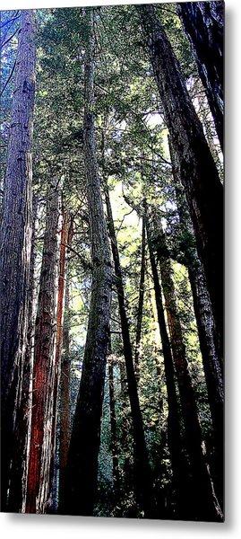 Redwoods Metal Print by Greg Thiemeyer