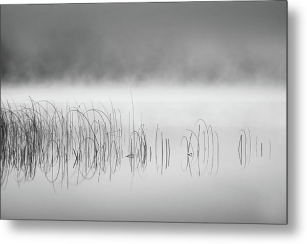 Reed In Fog Metal Print by Benny Pettersson