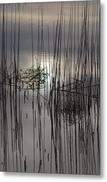 Reed Reflection 3 Metal Print by T C Brown