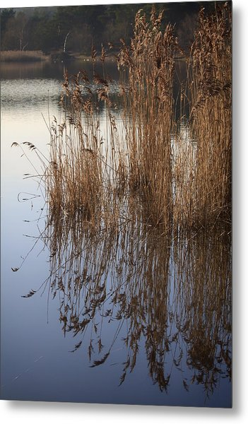 Reed Reflections Metal Print by Shirley Mitchell