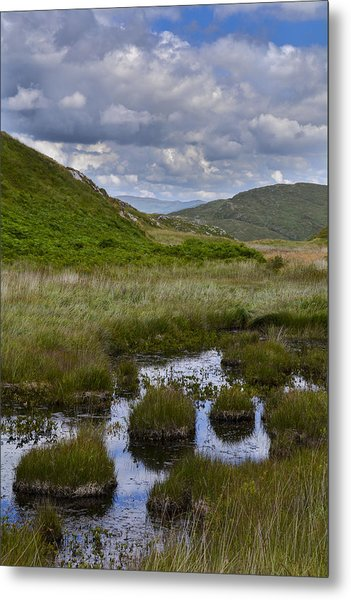 Reeds And Reflections Metal Print