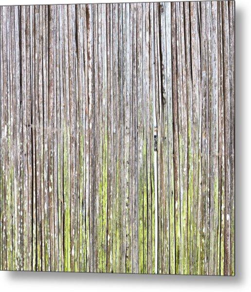 Reeds Background Metal Print