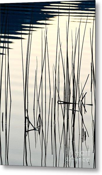 Reeds II Metal Print