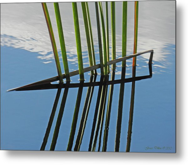 Metal Print featuring the photograph Reeds In Wetlands by Grace Dillon