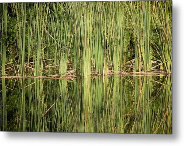 Reeds Of Reflection Metal Print