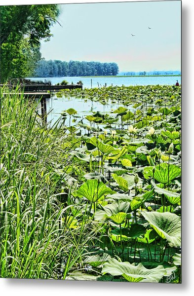 Reelfoot Lake Lilly Pads Metal Print