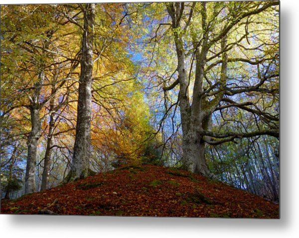 Reelig Forest  Metal Print