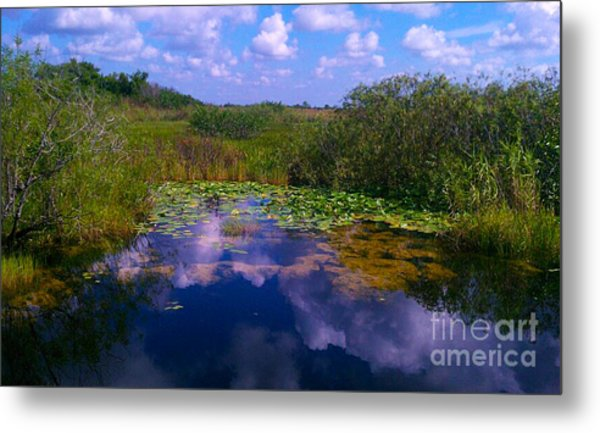 Reflecting In The Glades Metal Print
