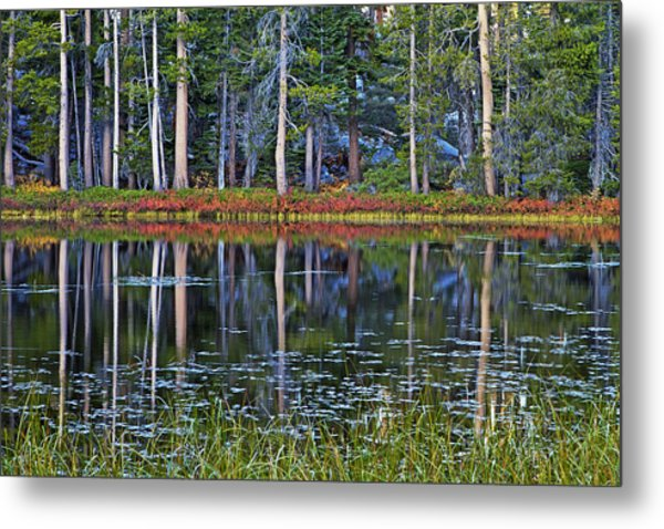 Reflecting Nature Metal Print