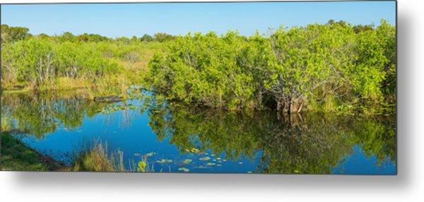 Reflection Of Trees In A Lake, Anhinga Metal Print