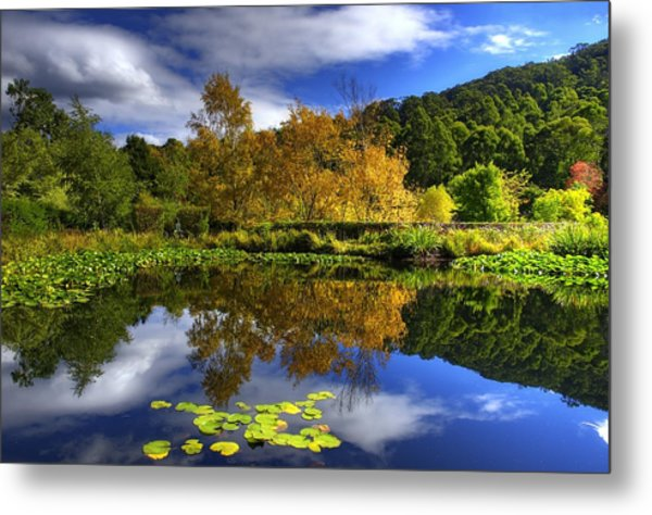 Reflections Metal Print by Damian M Photographer