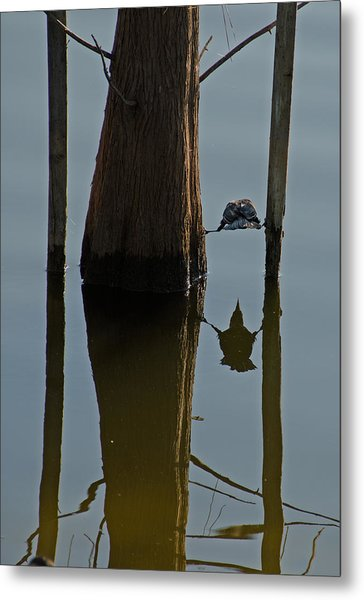 Reflections Metal Print by Julie Cameron