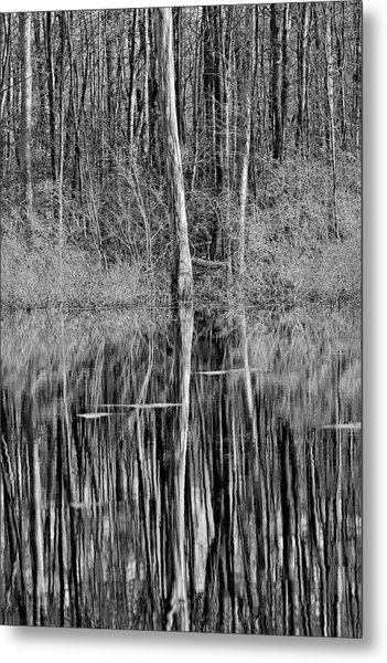 Reflections Of A Swamp Metal Print