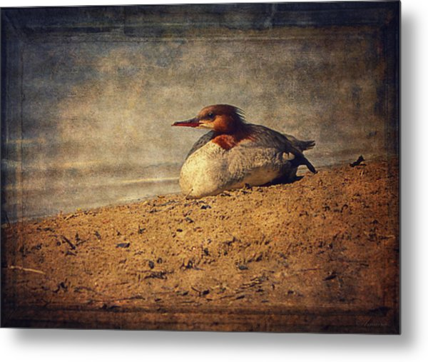 Relaxing Under The Sun  Metal Print