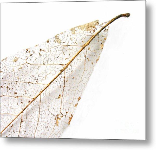Remnant Leaf Metal Print