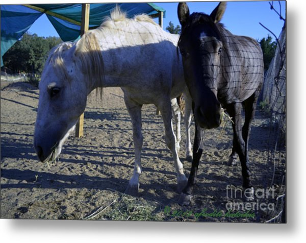Rescued Mustangs Metal Print