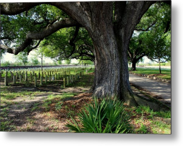 Resting In The Shade Metal Print