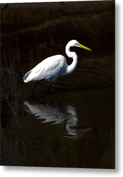 Resting Reflection Metal Print