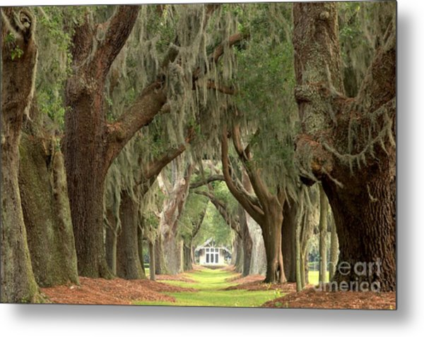 Retreat Avenue Of The Oaks Metal Print