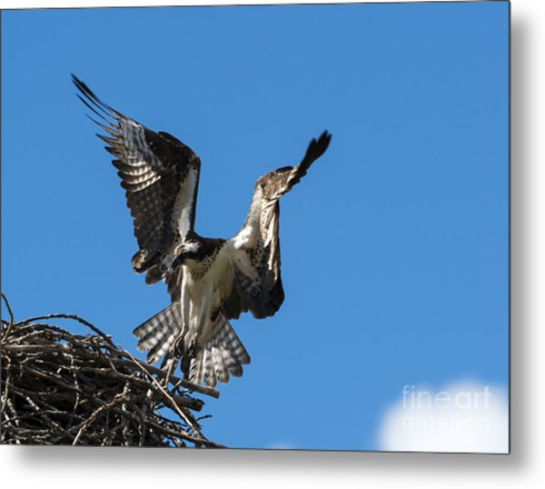 Returning To The Nest Metal Print