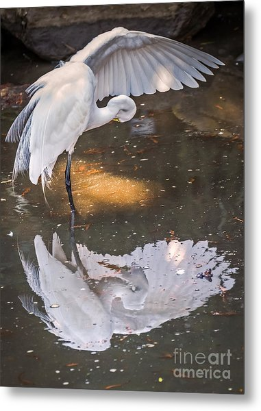 Metal Print featuring the photograph Revealed Close-up by Kate Brown