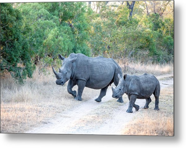 Rhino And Mom Metal Print by Craig Brown