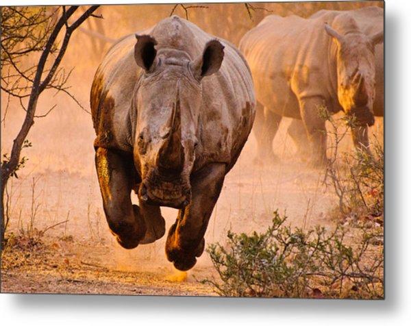 Rhino Learning To Fly Metal Print