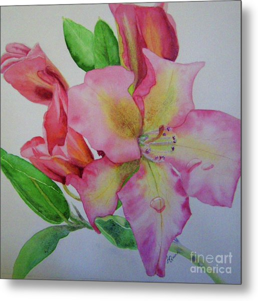 Rhodie With Dew I Metal Print