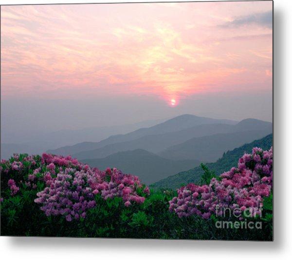 Rhododendron Sunrise Metal Print