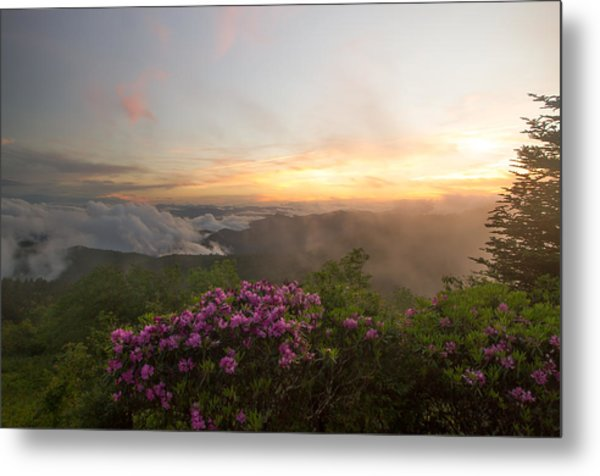 Rhododendron Sunset Metal Print