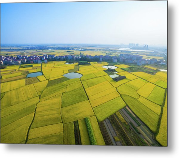 Rice Field Metal Print by Yangna