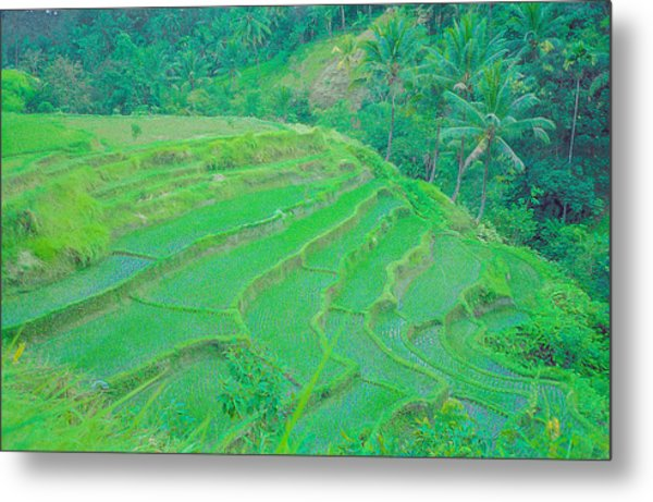 Rice Fields In Indonesia Metal Print