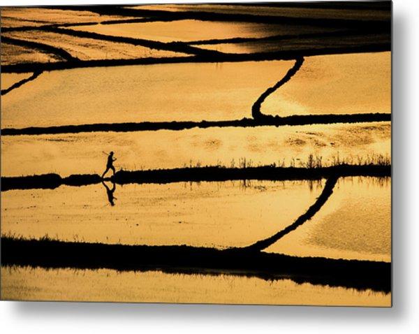 Rice Metal Print by ?mm? Nisan